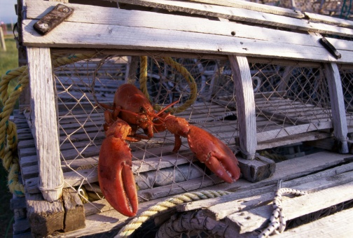 lobster_in_a_lobster_trap-ThinkstockPhotos-56687108.jpg